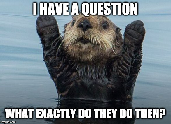 I HAVE A QUESTION WHAT EXACTLY DO THEY DO THEN? | image tagged in hands up otter | made w/ Imgflip meme maker