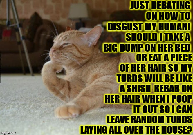 CAT DEBATE | JUST DEBATING ON HOW TO DISGUST MY HUMAN! SHOULD I TAKE A BIG DUMP ON HER BED OR EAT A PIECE OF HER HAIR SO MY TURDS WILL BE LIKE A SHISH  K | image tagged in cat debate | made w/ Imgflip meme maker