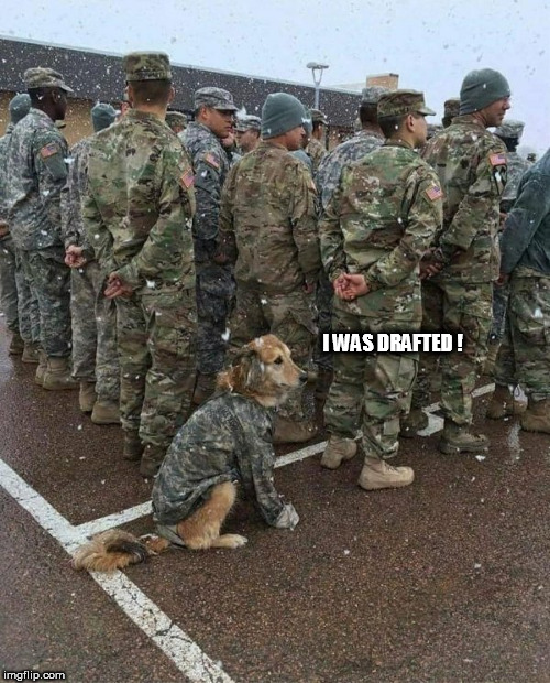 army dog | I WAS DRAFTED ! | image tagged in army dog | made w/ Imgflip meme maker