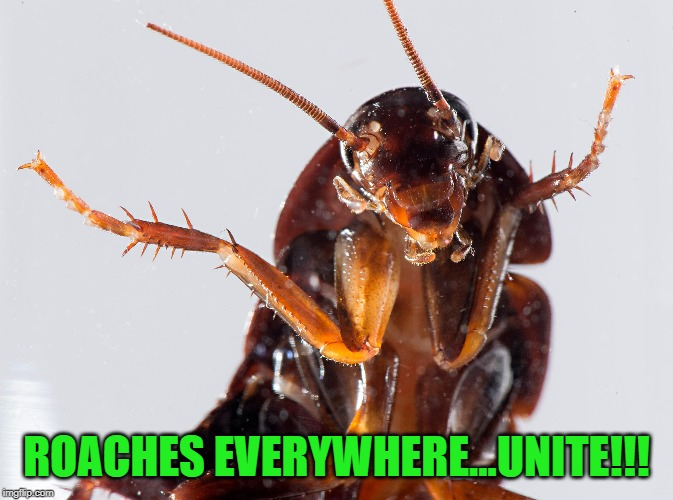 ROACHES EVERYWHERE...UNITE!!! | made w/ Imgflip meme maker