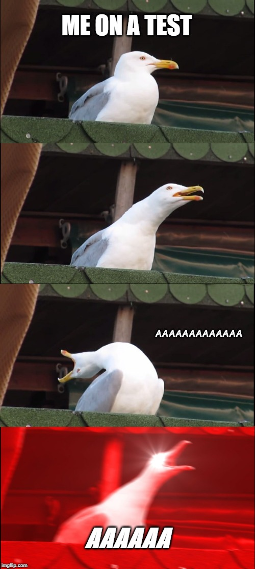 Inhaling Seagull | ME ON A TEST AAAAAAAAAAAAA AAAAAA | image tagged in memes,inhaling seagull | made w/ Imgflip meme maker