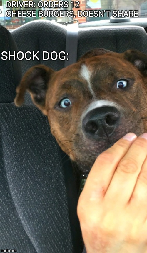 "Introducing ""Shock dog"" 