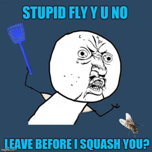 There's always that one fly, that will not leave you alone! Make Your Own Templates week, May 25th - June 1st (A 44colt event) | STUPID FLY Y U NO LEAVE BEFORE I SQUASH YOU? | image tagged in memes,scumbag house fly,y u no,44colt,make your own templates week,flies | made w/ Imgflip meme maker