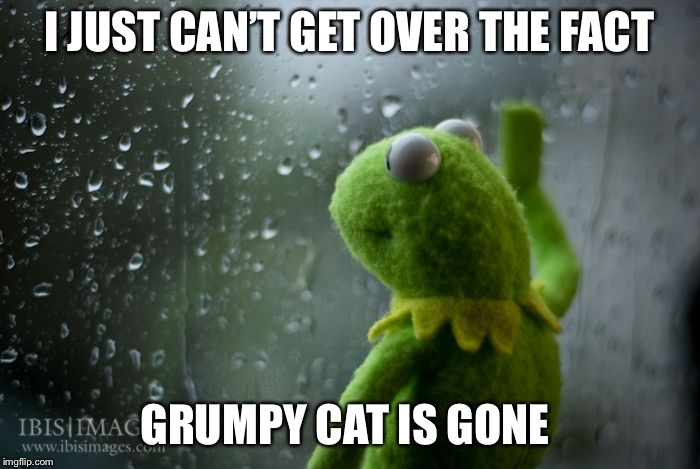 kermit window | I JUST CAN'T GET OVER THE FACT GRUMPY CAT IS GONE | image tagged in kermit window | made w/ Imgflip meme maker