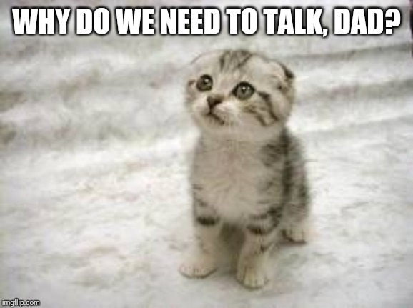 Sad Cat | WHY DO WE NEED TO TALK, DAD? | image tagged in memes,sad cat | made w/ Imgflip meme maker