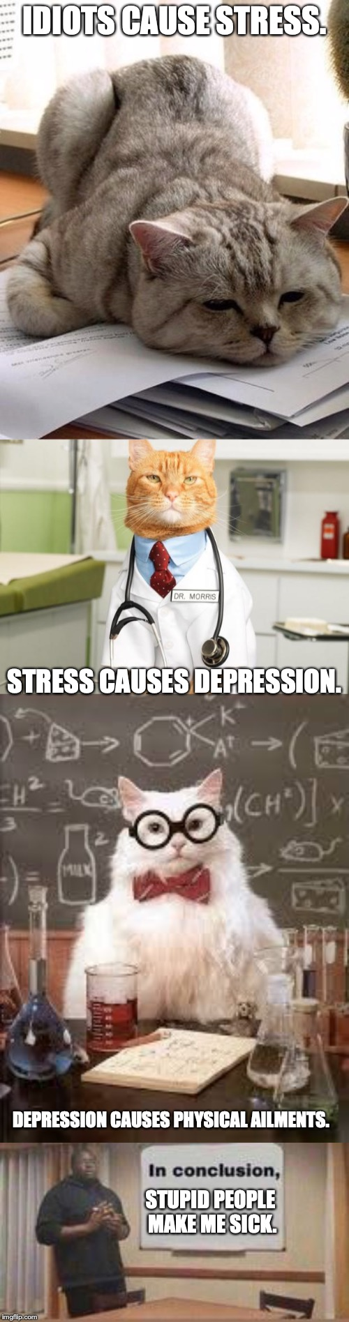 Logic, my friends. Logic everywhere. | IDIOTS CAUSE STRESS. STRESS CAUSES DEPRESSION. DEPRESSION CAUSES PHYSICAL AILMENTS. STUPID PEOPLE MAKE ME SICK. | image tagged in cat doctor,smart cat,tired cat,in conclusion,punman21 | made w/ Imgflip meme maker