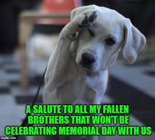 My condolences to anyone that is remembering someone this holiday. |  A SALUTE TO ALL MY FALLEN BROTHERS THAT WON'T BE CELEBRATING MEMORIAL DAY WITH US | image tagged in dog saluting,memes,not funny,memorial day,remember,condolences | made w/ Imgflip meme maker