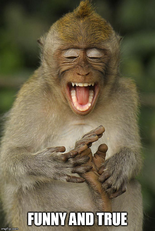 laughing monkey | FUNNY AND TRUE | image tagged in laughing monkey | made w/ Imgflip meme maker