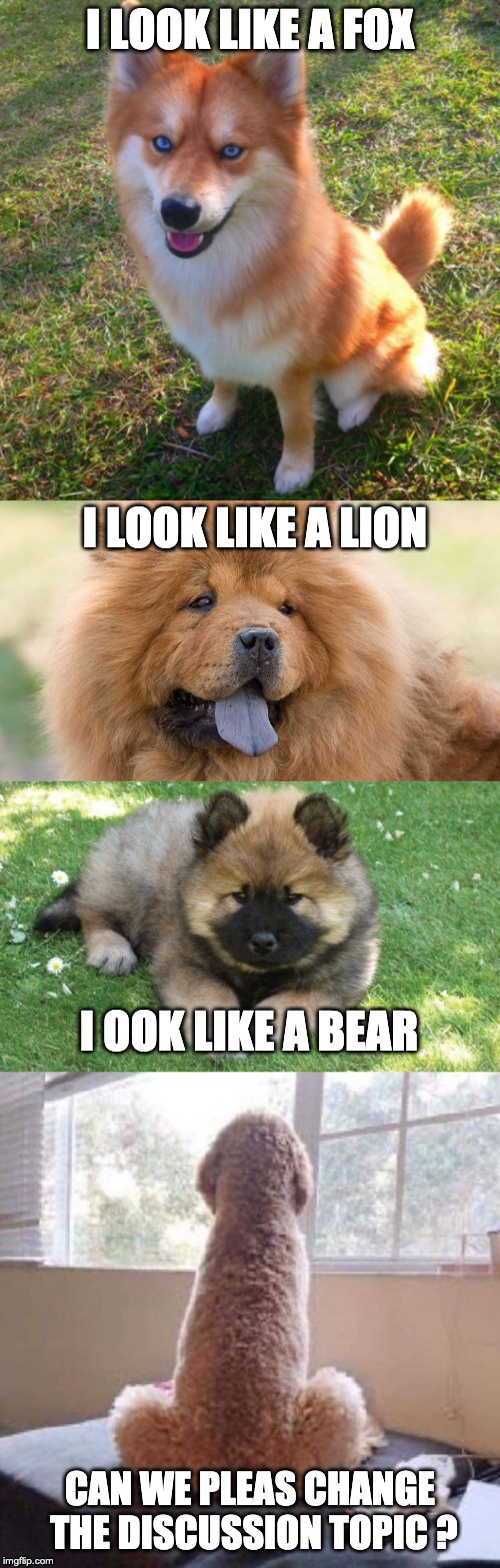 Dog looks | I LOOK LIKE A FOX CAN WE PLEAS CHANGE THE DISCUSSION TOPIC ? I LOOK LIKE A LION I OOK LIKE A BEAR | image tagged in dogs,dog,funny,fun,meme,fox | made w/ Imgflip meme maker