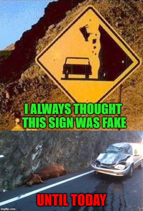 They must have a problem with suicidal cows around here! |  I ALWAYS THOUGHT THIS SIGN WAS FAKE; UNTIL TODAY | image tagged in funny signs,memes,falling cows,funny,signs,suicidal cows | made w/ Imgflip meme maker