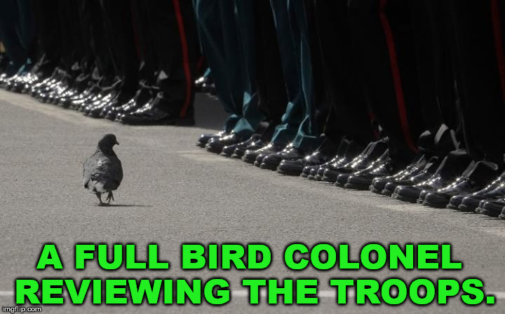 Hope you thank troops today for their service. |  A FULL BIRD COLONEL REVIEWING THE TROOPS. | image tagged in memorial day,support our troops,military | made w/ Imgflip meme maker
