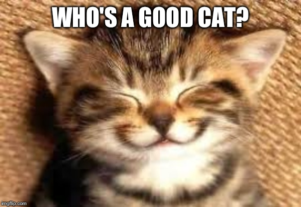 Happy cat | WHO'S A GOOD CAT? | image tagged in happy cat | made w/ Imgflip meme maker