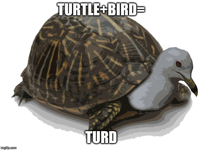 turtle bird | TURTLE+BIRD= TURD | image tagged in funny,disturbing,memes,funny memes,turtle,birds | made w/ Imgflip meme maker