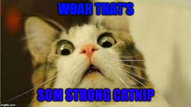 Funny animals | WOAH THAT'S SOM STRONG CATNIP | image tagged in funny animals | made w/ Imgflip meme maker