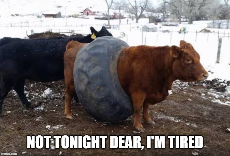 tired out |  NOT TONIGHT DEAR, I'M TIRED | image tagged in bull,tired | made w/ Imgflip meme maker