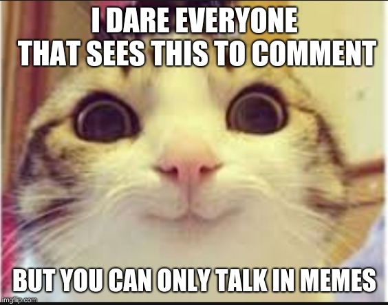 I DARE EVERYONE THAT SEES THIS TO COMMENT BUT YOU CAN ONLY TALK IN MEMES | image tagged in meme,cats,comment,memes | made w/ Imgflip meme maker
