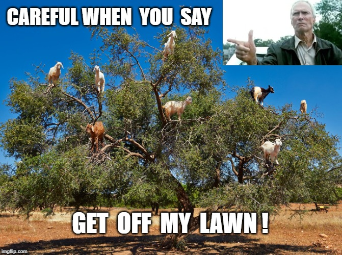 Not Quite What I Expected ... | CAREFUL WHEN  YOU  SAY GET  OFF  MY  LAWN ! | image tagged in get off my lawn - goats,clint eastwood,rick75230 | made w/ Imgflip meme maker