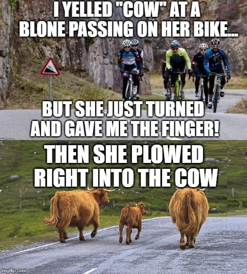 Silly cow! | THEN SHE PLOWED RIGHT INTO THE COW | image tagged in evil cows,cycling,funny memes | made w/ Imgflip meme maker