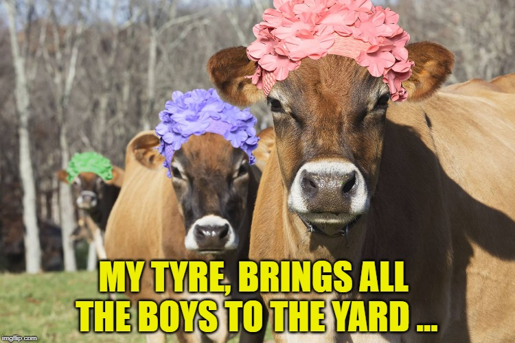 MY TYRE, BRINGS ALL THE BOYS TO THE YARD ... | made w/ Imgflip meme maker