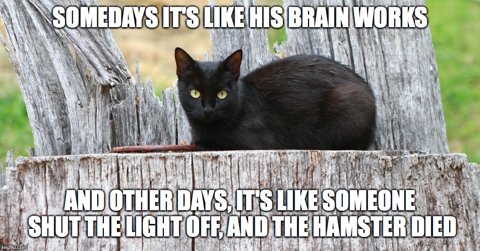 Barn Cat Quotes - Imgflip