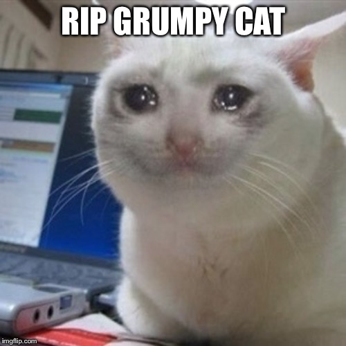 Crying cat | RIP GRUMPY CAT | image tagged in crying cat | made w/ Imgflip meme maker