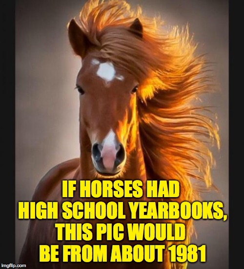 Farah Fawcett Mustang | IF HORSES HAD HIGH SCHOOL YEARBOOKS, THIS PIC WOULD BE FROM ABOUT 1981 | image tagged in horse,memes,yearbook | made w/ Imgflip meme maker