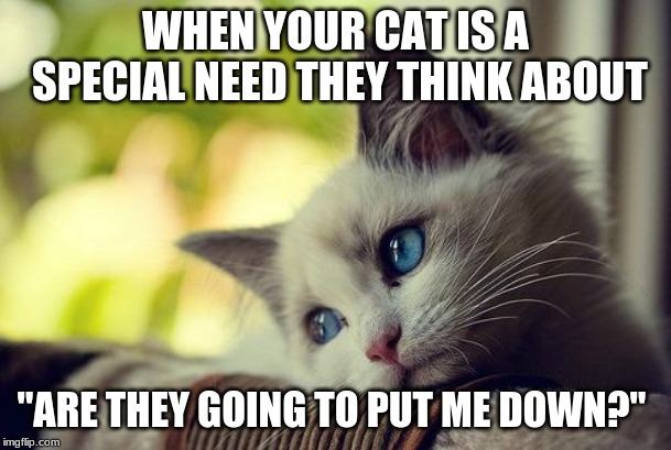 "First World Problems Cat | WHEN YOUR CAT IS A SPECIAL NEED THEY THINK ABOUT ""ARE THEY GOING TO PUT ME DOWN?"" 
