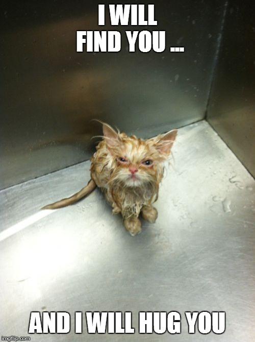 Kill You Cat |  I WILL FIND YOU ... AND I WILL HUG YOU | image tagged in memes,kill you cat | made w/ Imgflip meme maker