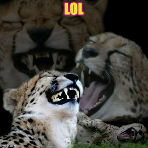 Laughing tiger | LOL | image tagged in laughing tiger | made w/ Imgflip meme maker