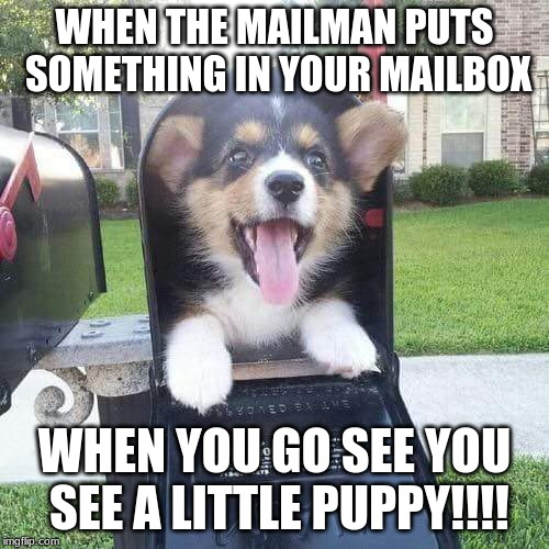 Cute doggo in mailbox |  WHEN THE MAILMAN PUTS SOMETHING IN YOUR MAILBOX; WHEN YOU GO SEE YOU SEE A LITTLE PUPPY!!!! | image tagged in cute doggo in mailbox | made w/ Imgflip meme maker
