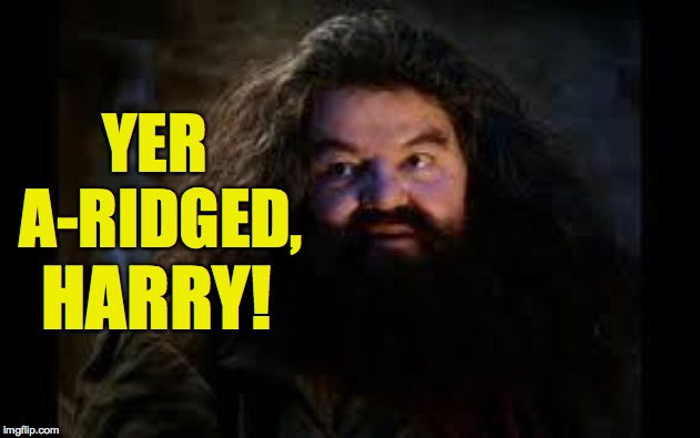 hagrid yer a wizard | YER A-RIDGED, HARRY! | image tagged in hagrid yer a wizard | made w/ Imgflip meme maker