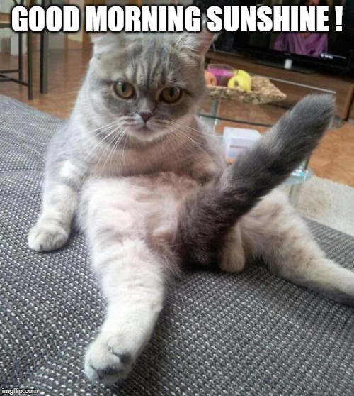 Sexy Cat | GOOD MORNING SUNSHINE ! | image tagged in memes,sexy cat | made w/ Imgflip meme maker