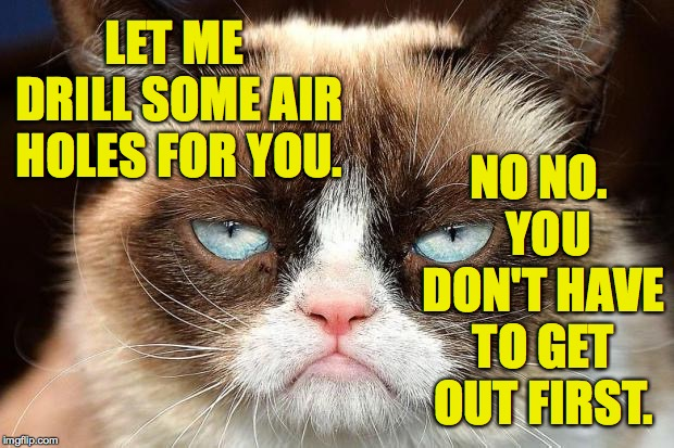 Grumpy Cat Not Amused Meme | LET ME DRILL SOME AIR HOLES FOR YOU. NO NO.  YOU DON'T HAVE TO GET OUT FIRST. | image tagged in memes,grumpy cat not amused,grumpy cat | made w/ Imgflip meme maker