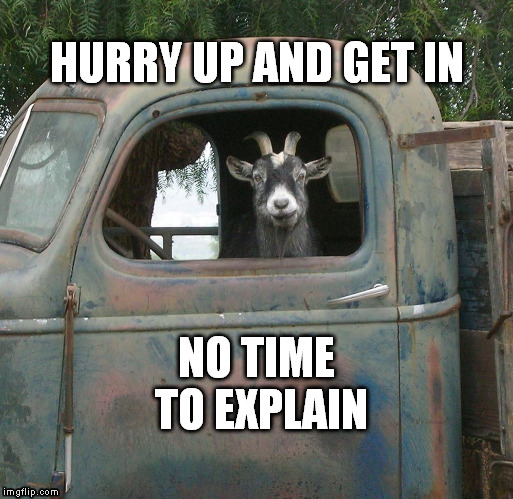 Hurry up and get in, no time to explain. | HURRY UP AND GET IN NO TIME TO EXPLAIN | image tagged in goat memes,truck | made w/ Imgflip meme maker