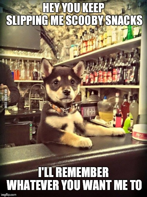 Bartender Puppy | HEY YOU KEEP SLIPPING ME SCOOBY SNACKS I'LL REMEMBER WHATEVER YOU WANT ME TO | image tagged in bartender puppy | made w/ Imgflip meme maker