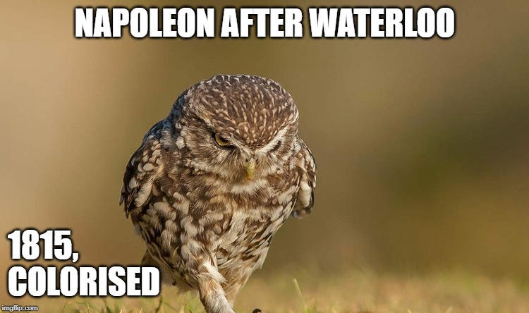 NAPOLEON AFTER WATERLOO 1815,                                                        COLORISED | image tagged in history,napoleon,owl,bird,thoughtful | made w/ Imgflip meme maker