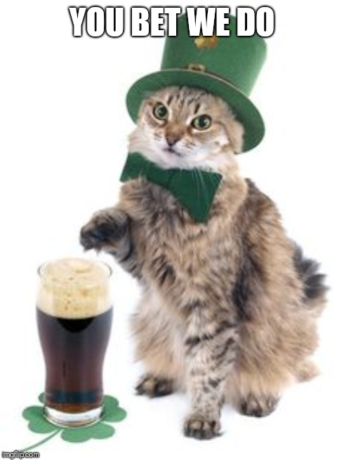 Irish cat | YOU BET WE DO | image tagged in irish cat | made w/ Imgflip meme maker