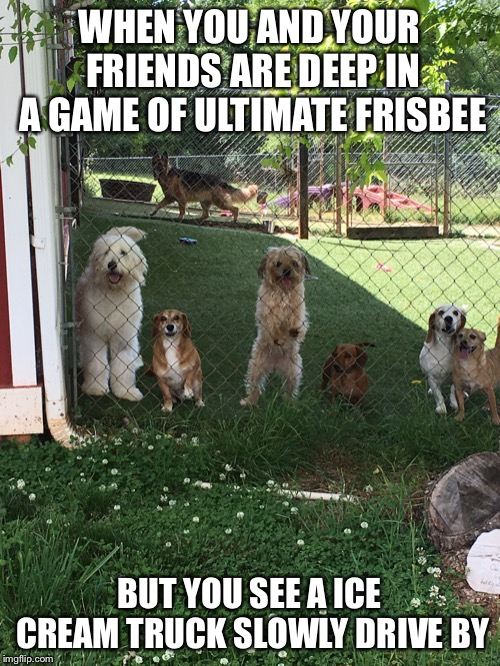 They see it rolling... | WHEN YOU AND YOUR FRIENDS ARE DEEP IN A GAME OF ULTIMATE FRISBEE BUT YOU SEE A ICE CREAM TRUCK SLOWLY DRIVE BY | image tagged in memes,doggos,cute dogs,funny | made w/ Imgflip meme maker