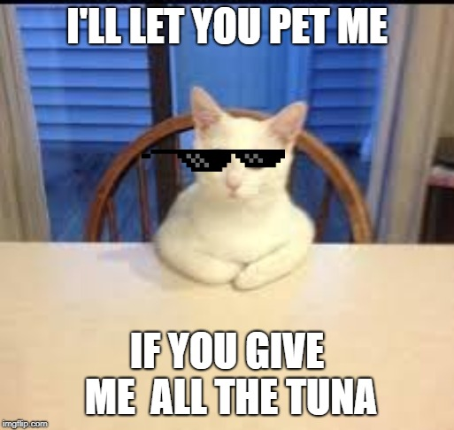 funny cat negotiating | I'LL LET YOU PET ME IF YOU GIVE ME  ALL THE TUNA | image tagged in funny cat memes | made w/ Imgflip meme maker