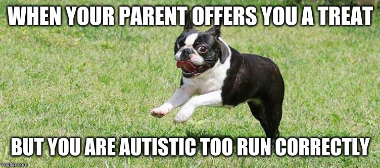 autistic dog | WHEN YOUR PARENT OFFERS YOU A TREAT BUT YOU ARE AUTISTIC TOO RUN CORRECTLY | image tagged in dogs | made w/ Imgflip meme maker