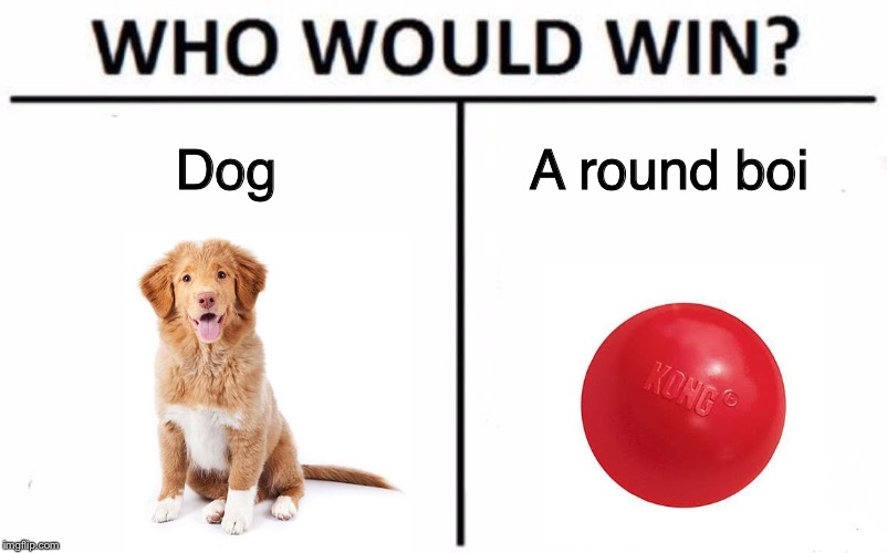 Doggoooo | Dog A round boi | image tagged in memes,who would win,funny,dog | made w/ Imgflip meme maker