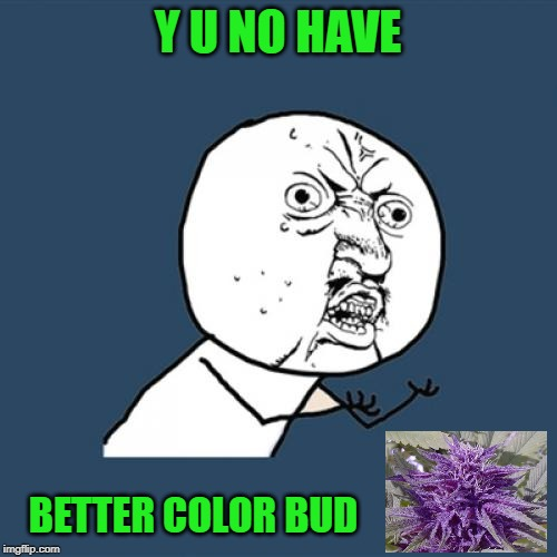 Y U No Meme | Y U NO HAVE BETTER COLOR BUD | image tagged in memes,y u no | made w/ Imgflip meme maker