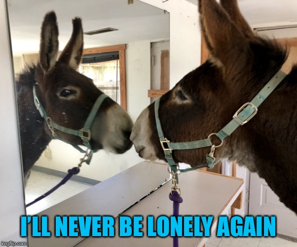 Gorgeous! (Dozer the Donkey) | I'LL NEVER BE LONELY AGAIN | image tagged in gorgeous dozer the donkey | made w/ Imgflip meme maker