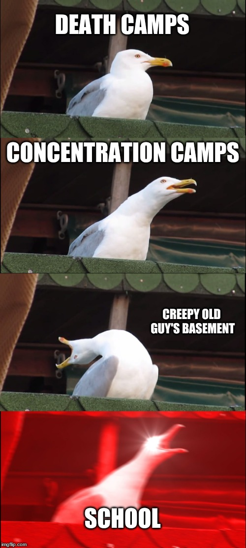 Inhaling Seagull Meme | DEATH CAMPS CONCENTRATION CAMPS CREEPY OLD GUY'S BASEMENT SCHOOL | image tagged in memes,inhaling seagull | made w/ Imgflip meme maker