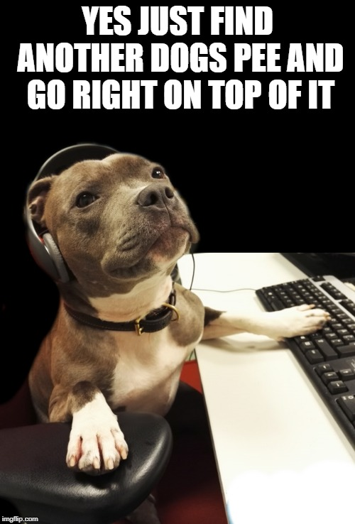 doggone good advice | YES JUST FIND ANOTHER DOGS PEE AND GO RIGHT ON TOP OF IT | image tagged in support,dog,true | made w/ Imgflip meme maker
