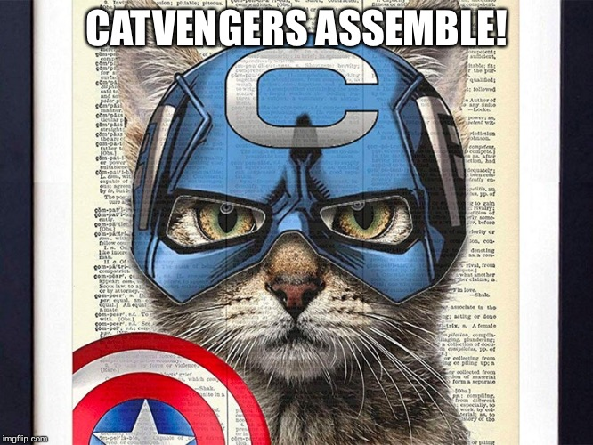 CATVENGERS ASSEMBLE! | made w/ Imgflip meme maker