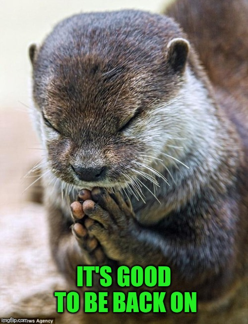 Thank you Lord Otter | IT'S GOOD TO BE BACK ON | image tagged in thank you lord otter | made w/ Imgflip meme maker