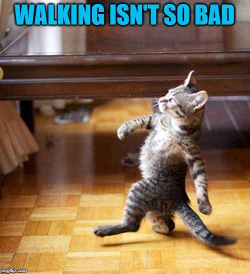 Cat Walking Like A Boss | WALKING ISN'T SO BAD | image tagged in cat walking like a boss | made w/ Imgflip meme maker