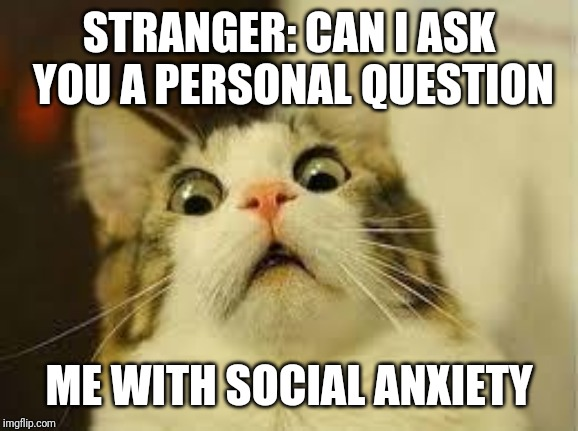 shocked cat | STRANGER: CAN I ASK YOU A PERSONAL QUESTION ME WITH SOCIAL ANXIETY | image tagged in shocked cat | made w/ Imgflip meme maker