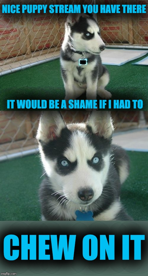 Insanity Puppy |  NICE PUPPY STREAM YOU HAVE THERE; IT WOULD BE A SHAME IF I HAD TO; CHEW ON IT | image tagged in memes,insanity puppy | made w/ Imgflip meme maker